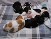 Jessa's puppies