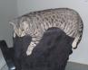 Andi Kitten RIP