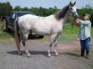My Horse Jasper....