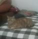 Rupert's Last Picture