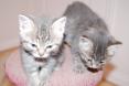 New Fur Babies!